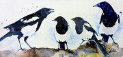 Magpies one