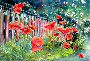 Red Poppies and Red Fence