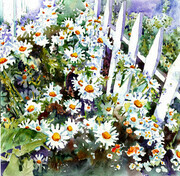 Shasta Daisies Two